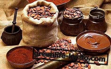 Cacao: descripción, propiedades, beneficios.