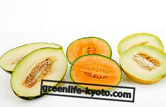 Valge melon ja kollane melon teie dieedi jaoks