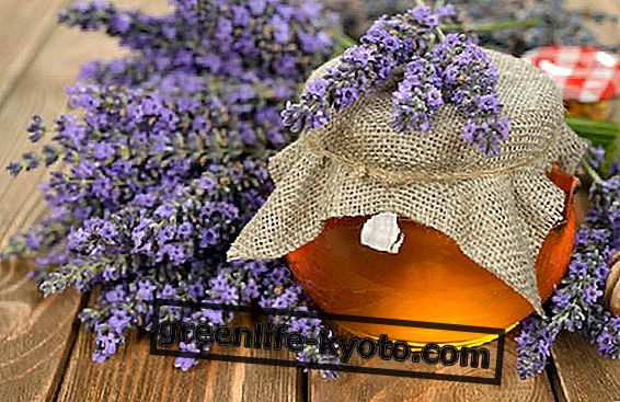 Lavender honey: characteristics, properties and use