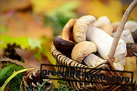 Μανιτάρια: ιδιότητες, θρεπτικές τιμές, θερμίδες