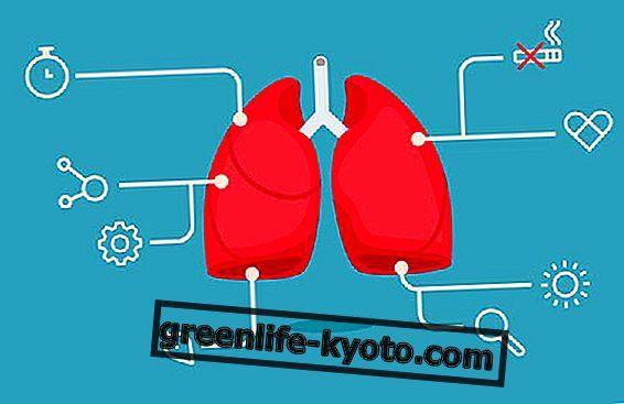Los 10 mejores alimentos para el sistema respiratorio.