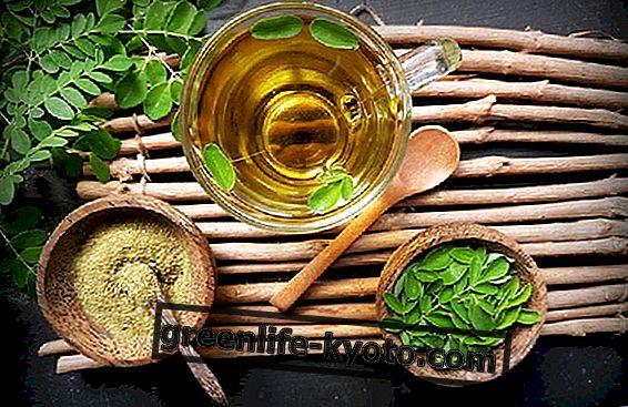 Moringa Oleifera og eliminering af tungmetaller