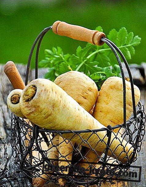 Pastinaak: eigenschappen, voedingswaarden, calorieën