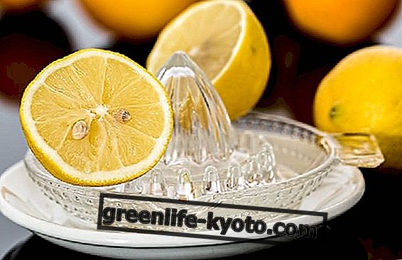 Citronpleje, alt helbred i en saft