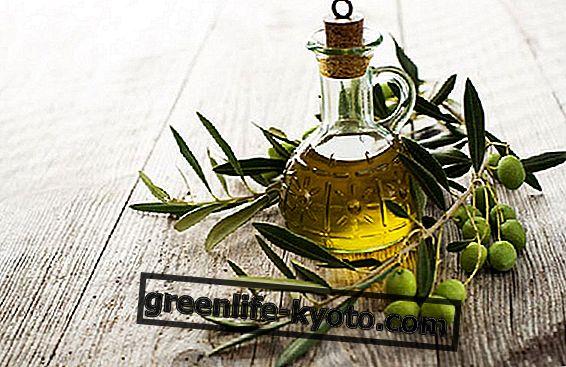 El aceite de oliva: historia de un producto milenario.