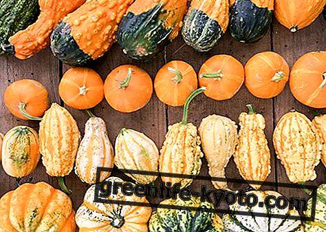 Dýně: vlastnosti, nutriční hodnoty, kalorie