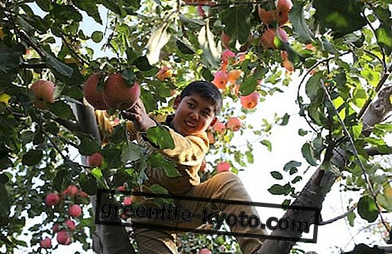 Vagabond, vegan, ωμό φαγητό, καλλιεργητής φρούτων: Yotam Gordon