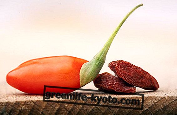 Goji bobice, svojstva i kako ih odabrati