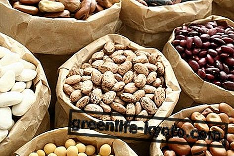 Τρόφιμα πλούσια σε φυτικές πρωτεΐνες: τι είναι