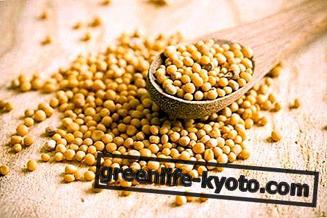 Garstyčių sėklos, savybės ir kaip jas naudoti