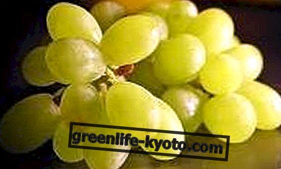 La uva es realmente la cura de todos.