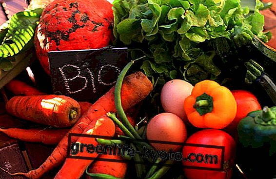 살충제를 분해하는 유기농 식단