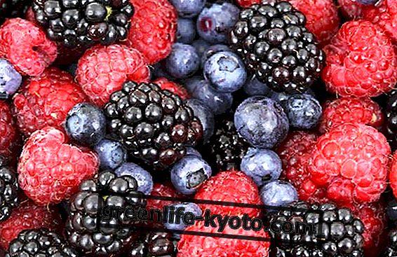Lesní plody, vlastnosti a recepty