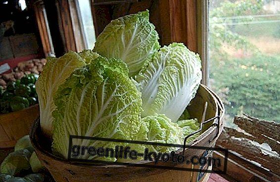 Vjetnamiešu virtuve: 2 tipiskas receptes