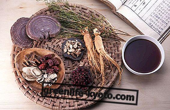 Café de bienestar a base de ganoderma lucidum.