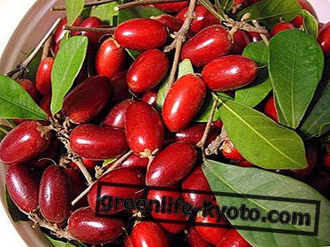 Čudo voće: svojstva, pogodnosti, kako jesti