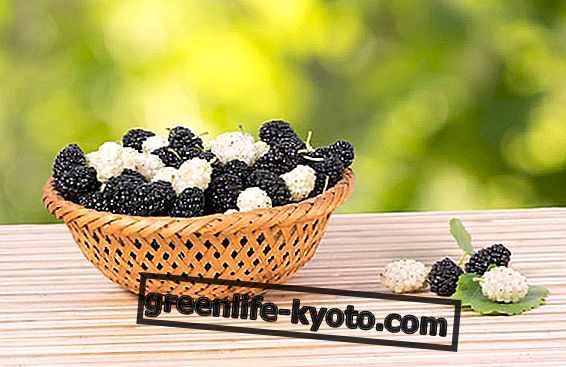 Moras blancas y negras: propiedades beneficiosas y recetas.