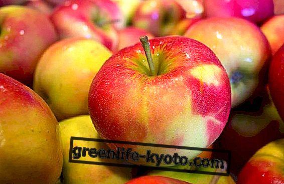 Jablkový ocot spaľuje tuk
