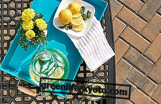 Fordelene ved citron: ved du hvordan man får mest ud af dem?