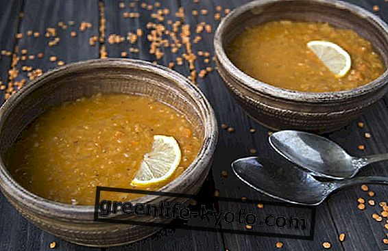 Red lentils, properties and recipes