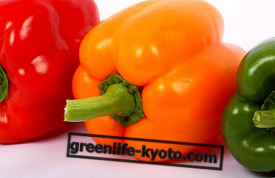 Topgroente van augustus: paprika's
