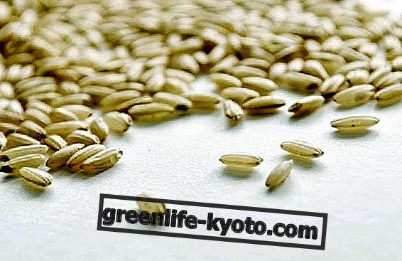 Кафявият ориз прави добра кръв