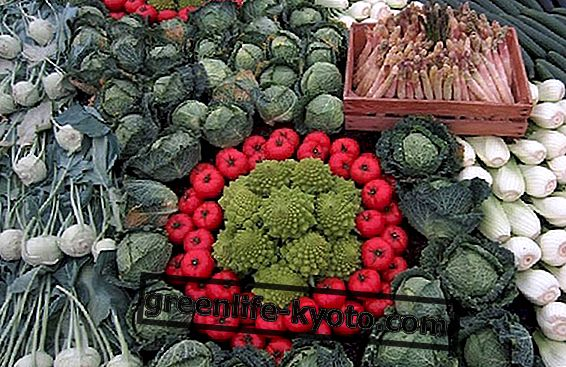 암 예방을위한 브로콜리 및 기타 식품