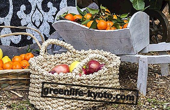 Diciembre frutas y verduras