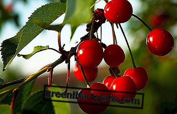 Kevät hedelmät ja vihannekset