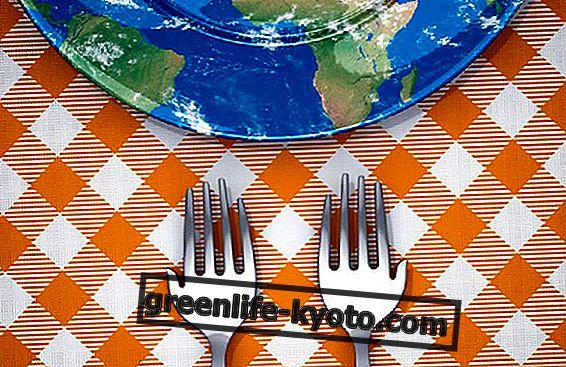 Недохранване и отпадъци на Деня на храненето