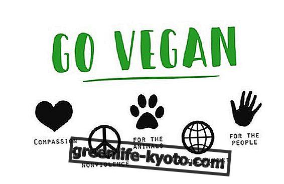Plantbaseret eller Vegan?  Her er forskellene