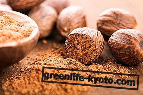 Nutmeg: vlastnosti, použitie, nutričné hodnoty