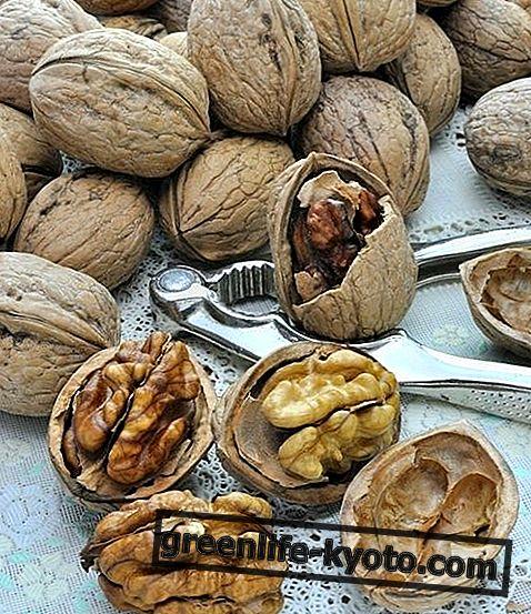 Pähkinät, ominaisuudet ja niiden käyttö