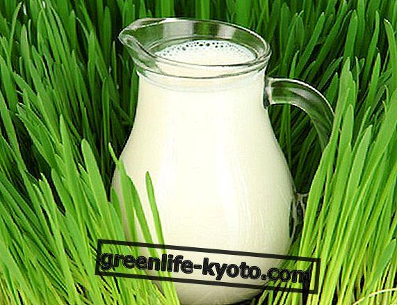 植物乳の抽出方法