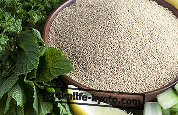 Amaranth seeds, properties and uses