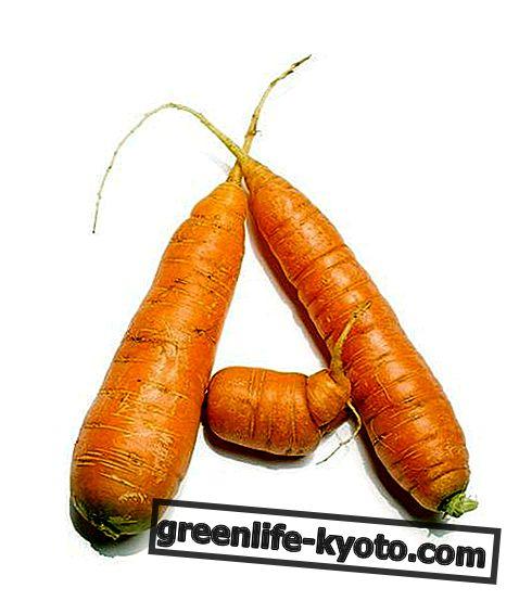 Natuurlijke vitamine A-supplementen, wat ze zijn en wanneer ze moeten worden ingenomen