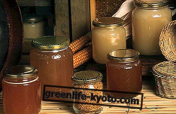 Eikalipta medus, īpašības un izmantošana virtuvē