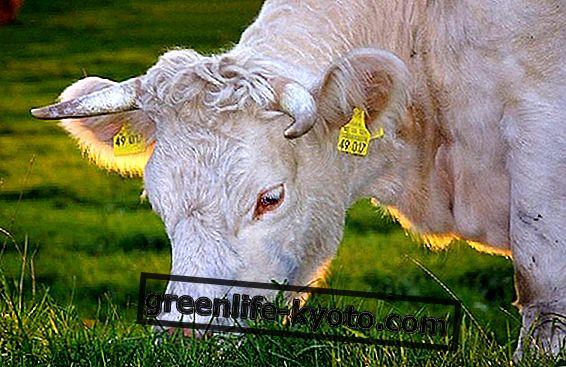 Poznámky ke spotřebě masa