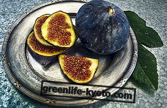 Top fruit of September, figs