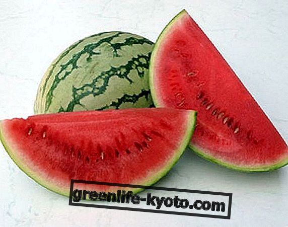 수박, 여름의 과일
