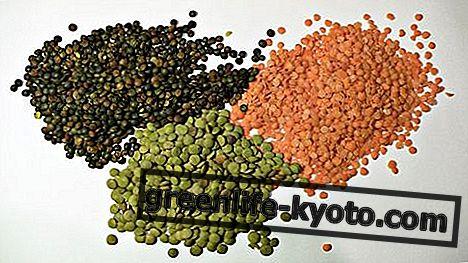 렌즈 콩 : 특성, 영양가, 칼로리