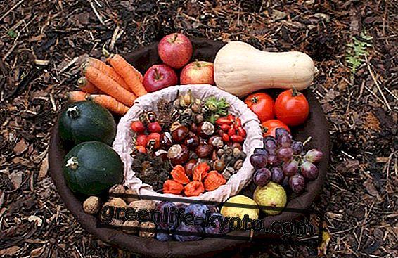 Úvahy o spotřebě vitaminu B12