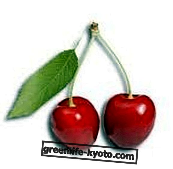 Trešnja, ukusno i zdravo voće