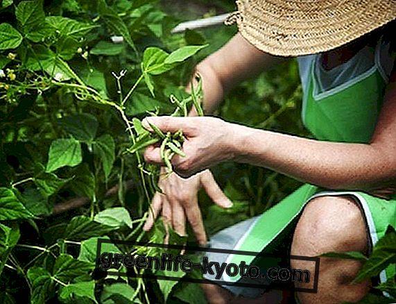 Biologische landbouw in Italië, groei in contrast