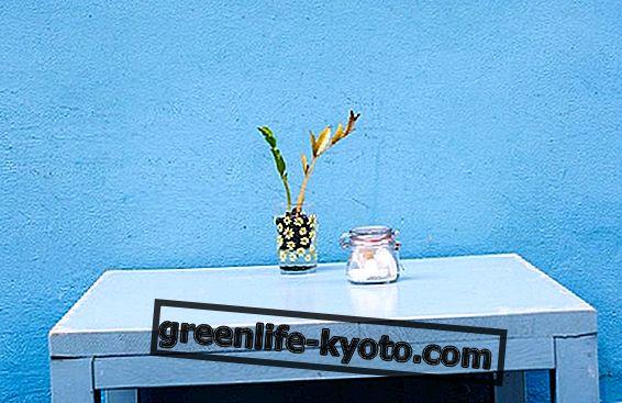 8 natuurlijke zoetstoffen: eigenschappen en gebruik