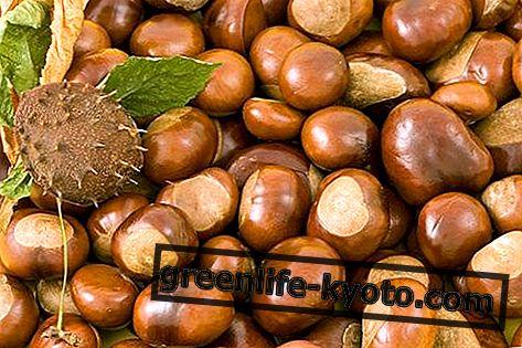Browns: lastnosti, hranilne vrednosti, kalorije