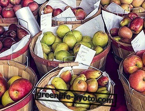 Τα αρχαία και ξεχασμένα μήλα
