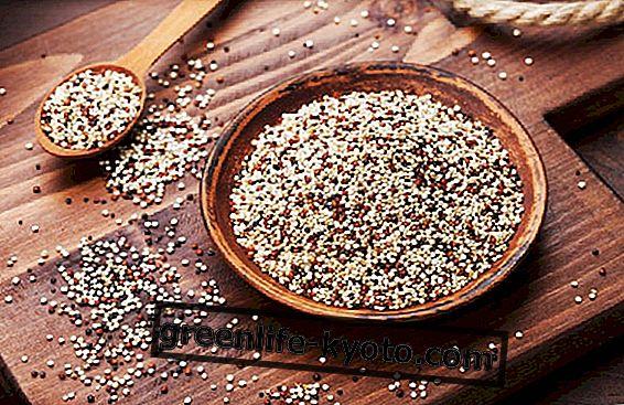 """Quinoa, en plante med """"unikke"""" egenskaber!"""