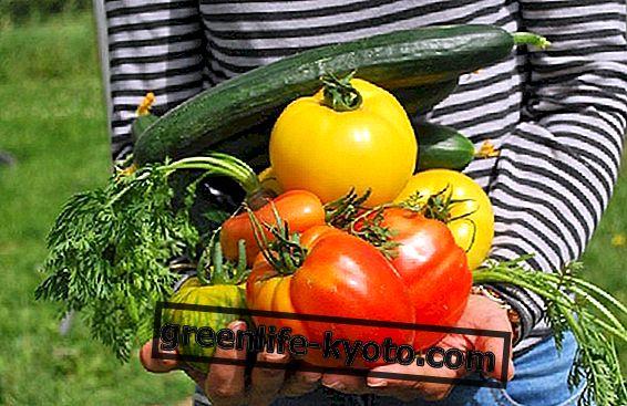 Kokie yra ekologiškų produktų privalumai