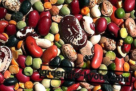Kolesterooli toitumine: milliseid toiduaineid võtta ja mida vältida